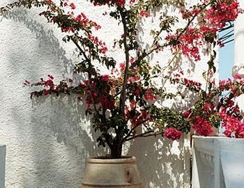 Villa Orizontes Εξωτερική Σπέτσες